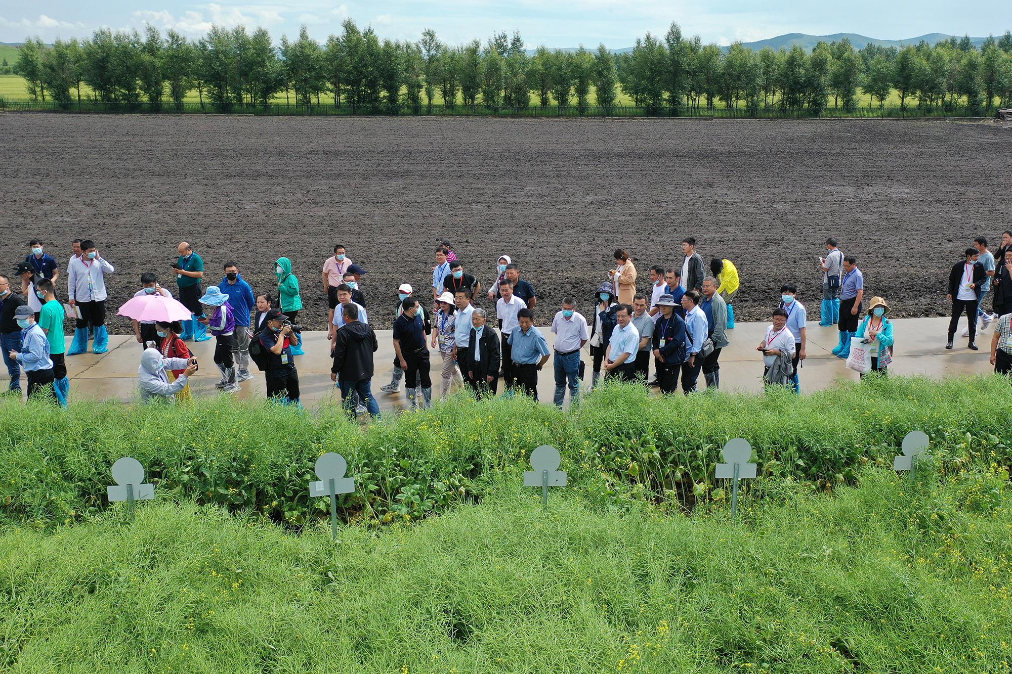 与会代表观摩国家油菜良种攻关项目油菜新品种展示试验及油菜新品种示范现场(记者 刘涛 摄) 拷贝