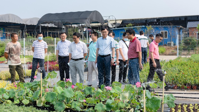 考察调研沙洋县花卉苗木产业