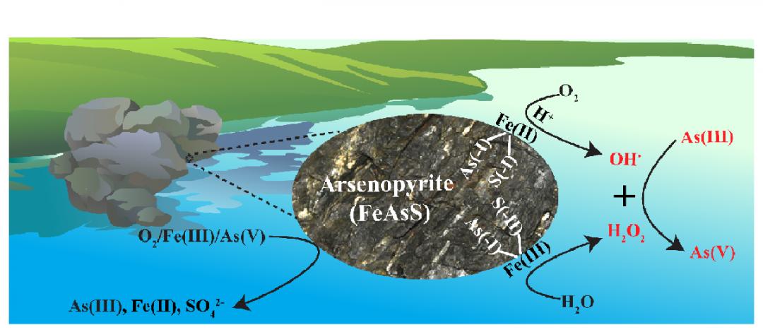 图1 有氧环境毒砂矿与As(III)相互作用机理示意图