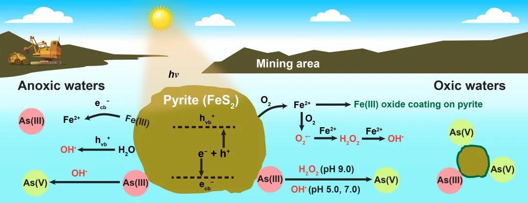 图2 太阳光辐射环境黄铁矿影响As(III)吸附与氧化过程示意图