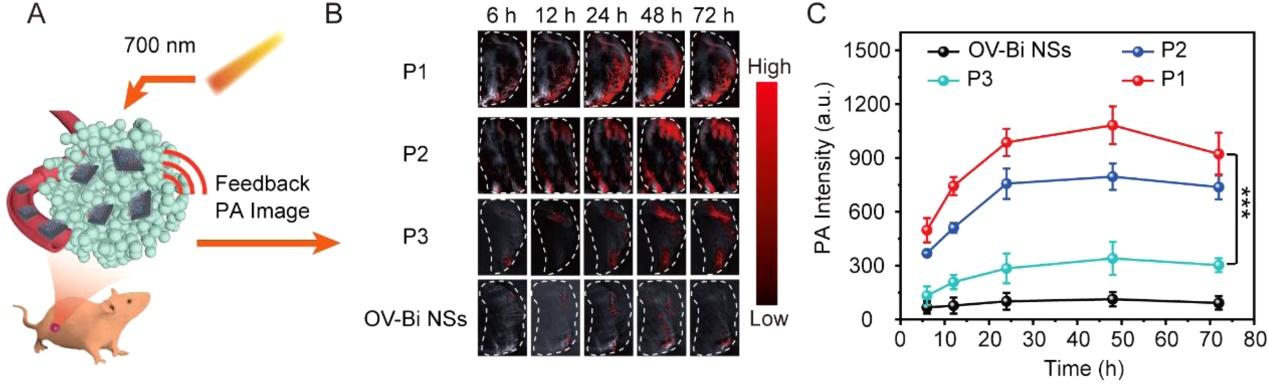 图3. BSP优良的在体光声成像性能