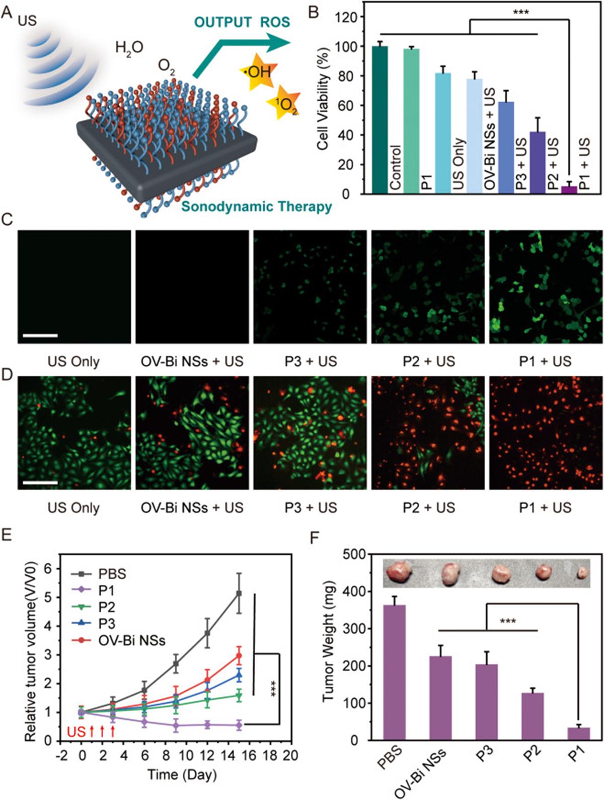图4. BSP对胰腺癌的声动力治疗效果