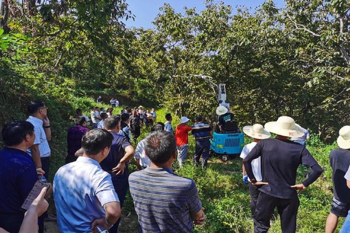 湖北省农业事业发展中心板栗机收演示活动现场