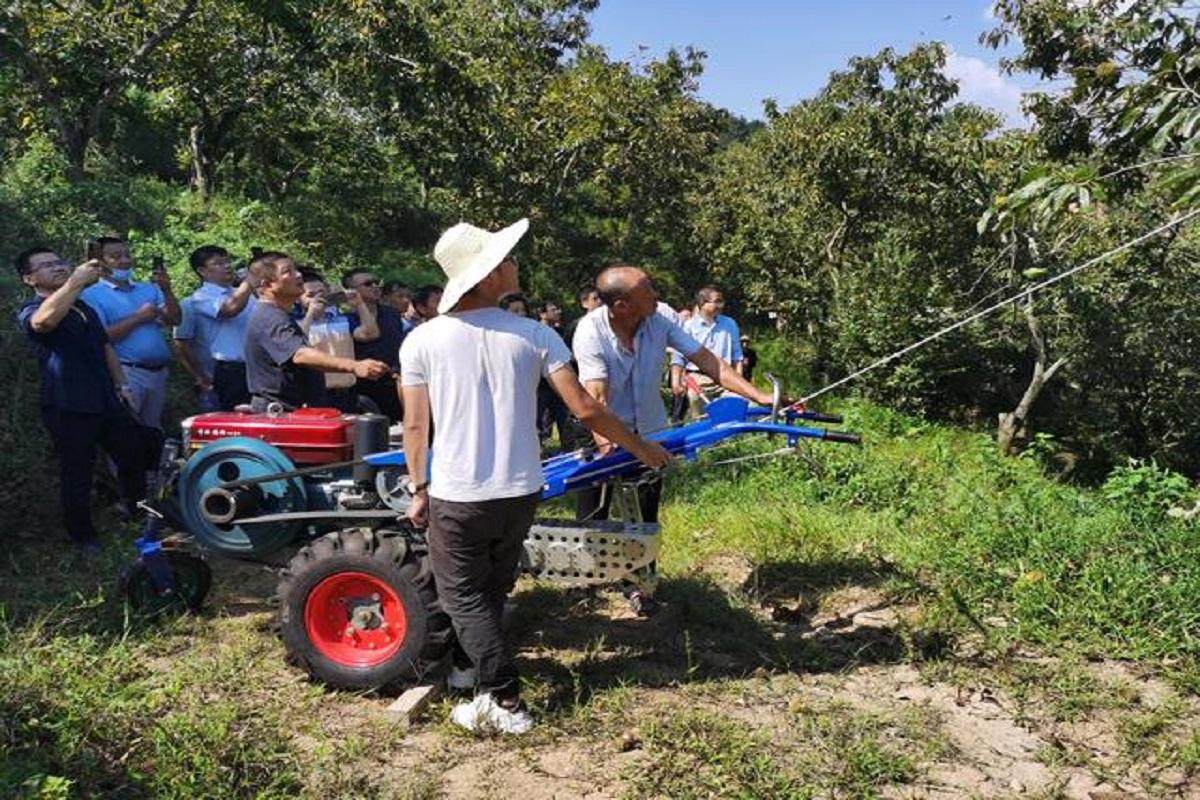 农机手使用摇振式板栗采收机采收板栗