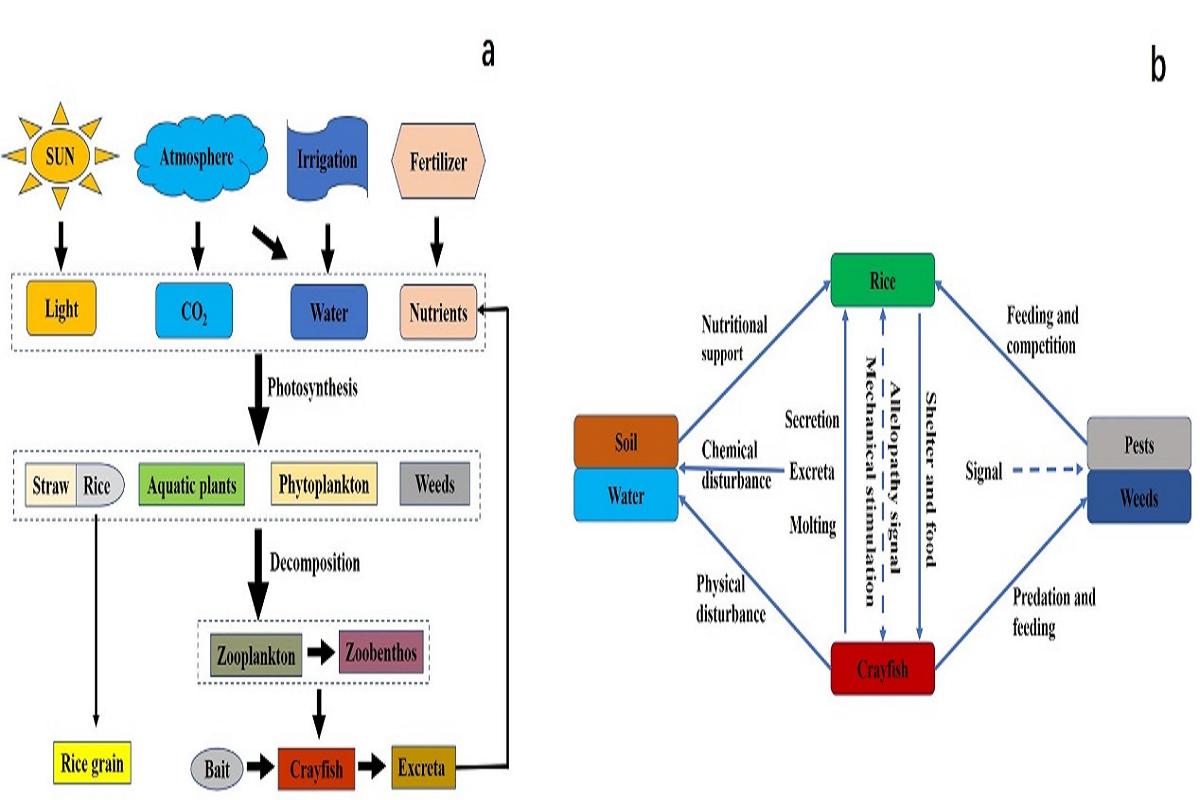 图3 稻虾模式可持续发展原理与技术策略