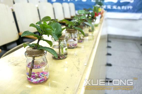 盆栽diy:废物利用 绿化生活